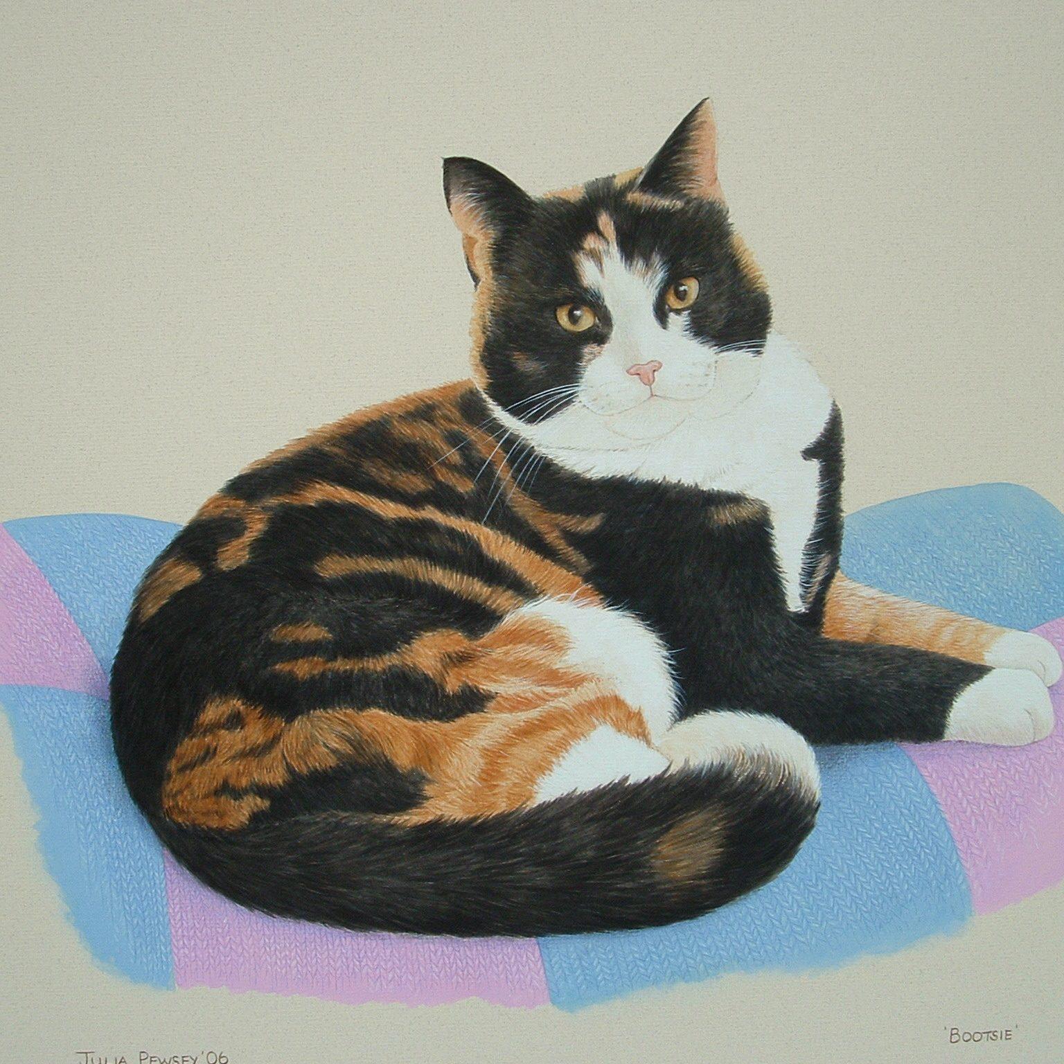 1 Bootsie - Tortoiseshell Cat