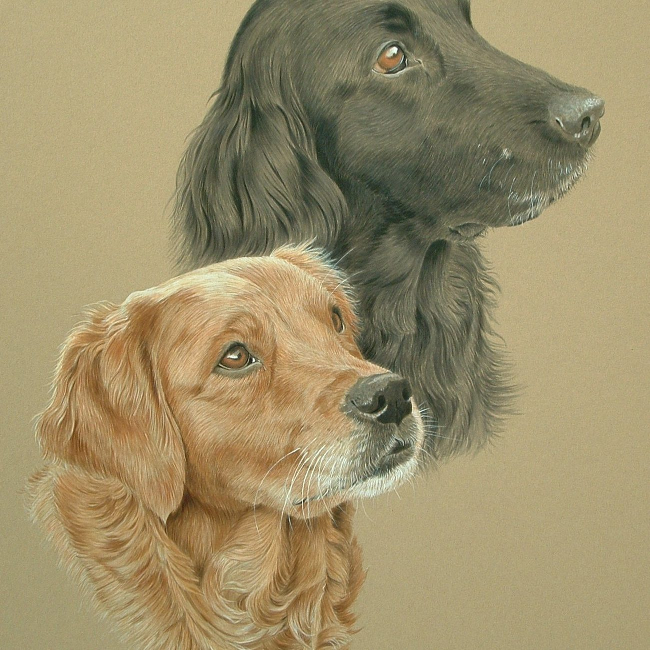 43 Megan and Amber - Golden Retriever and Flat-coated Retriever (alternative)